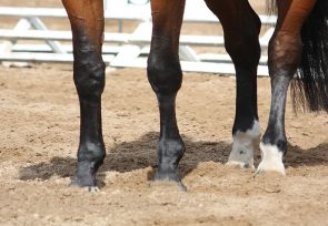 Equestrian Sand