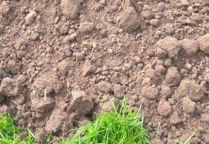 Certified Topsoil